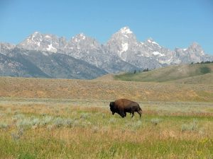 Wyoming1