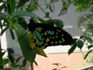 Omaha-Henry-Doorly-Zoo-Butterfly-640x4801
