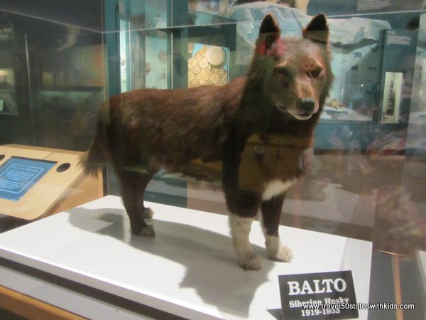 Balto Cleveland Museum of Natural History
