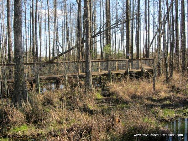 Alligator Alley Swamp