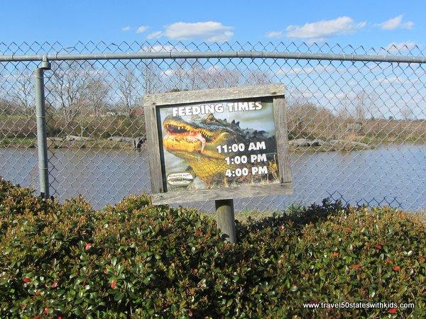 Alligator Alley feeding times
