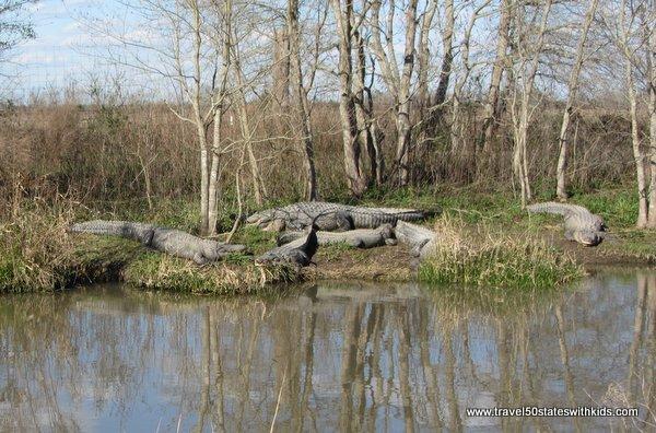Alligators or statues
