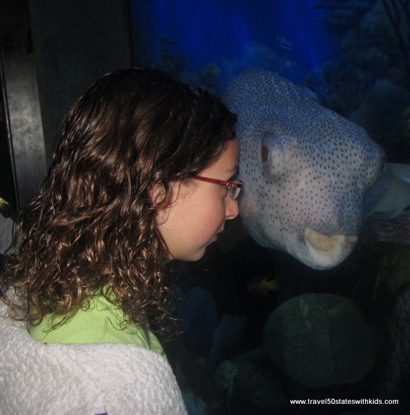 Eyeing a fish at Jenkinon's Aquarium