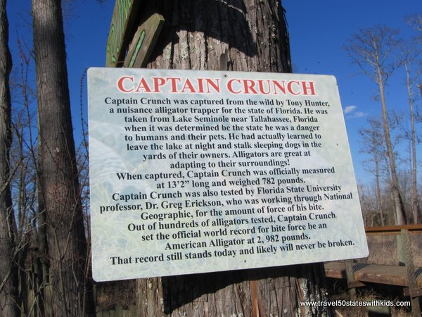 Facts about Captain Crunch alligator