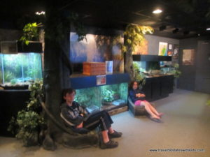 Jenkinsons-Aquarium