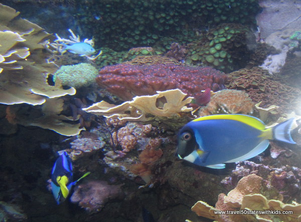 Jenkinson's Aquarium Fish 1