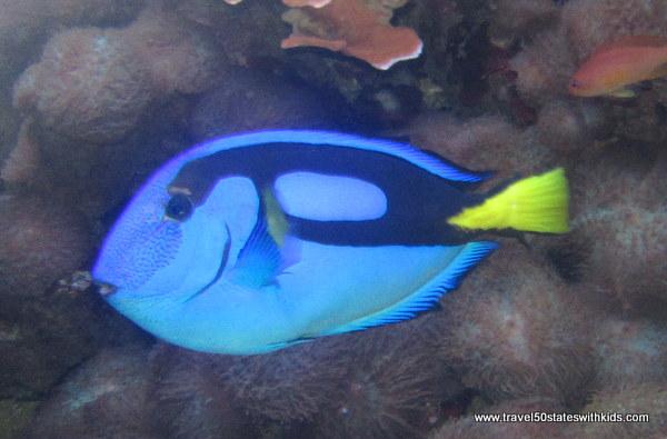Jenkinson's Aquarium Fish 2