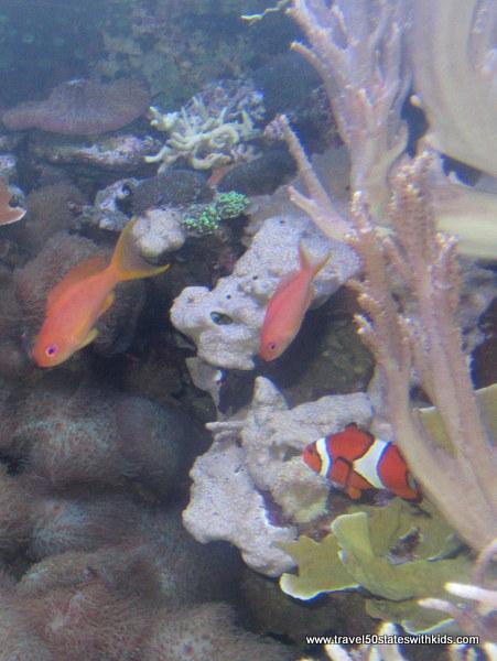 Jenkinson's Aquarium Fish 3
