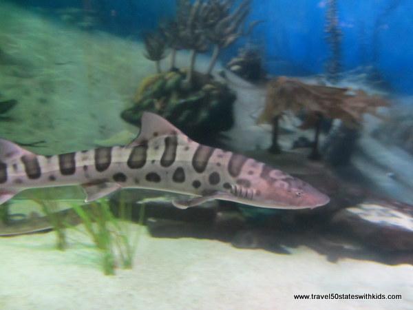 Jenkinsons Aquarium Shark 2