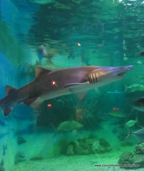 Jenkinsons Aquarium shark 1
