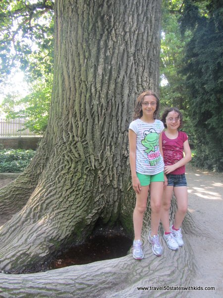 Tree planted by George Washington at Mount Vernon