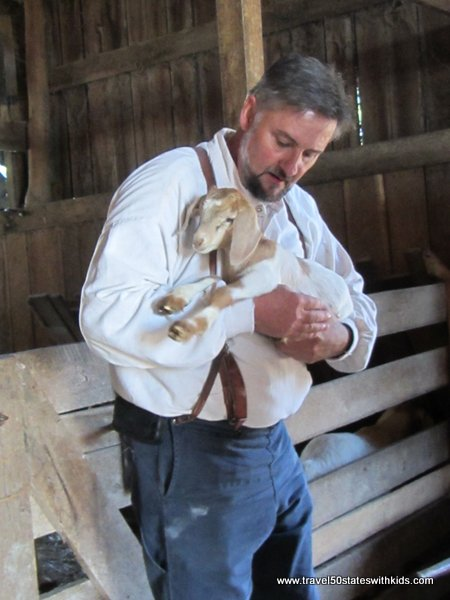 Baby goat at the Shaker Village