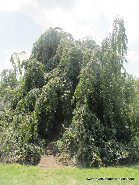 Holden Arboretum favorite tree