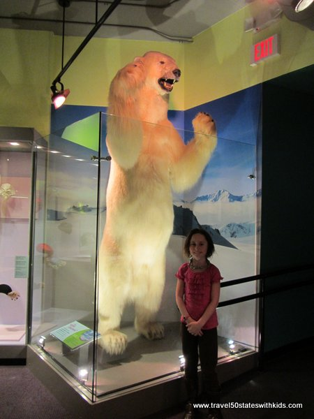 Polar bear at Kentucky Science Center