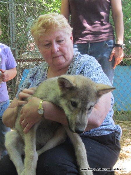 Holding a wolf cub