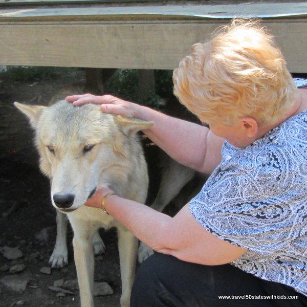 Petting a wolf at Wolf Creek Habitat