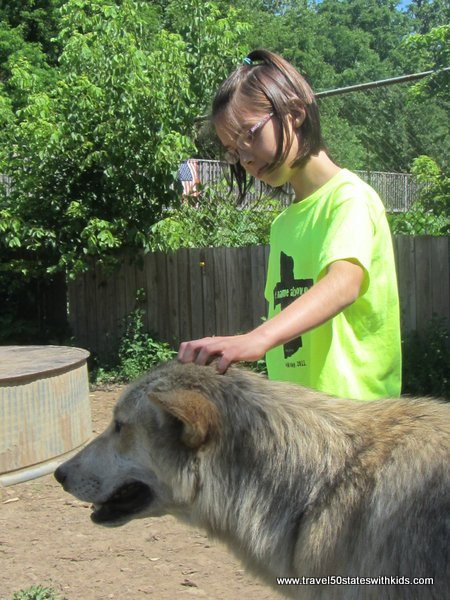 Playing with a wolf at Wolf Creek Habitat