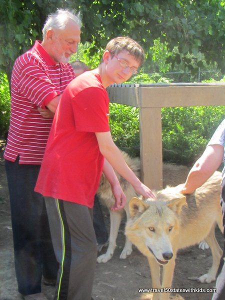 Playing with wolves at Wolf Creek Habitat