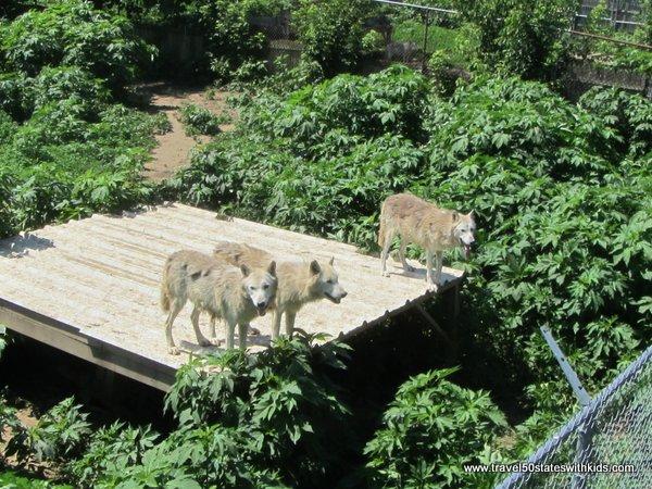 Wolf Enclosure