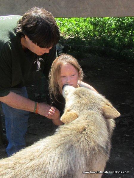Wolf Encounter at Wolf Creek Habitat