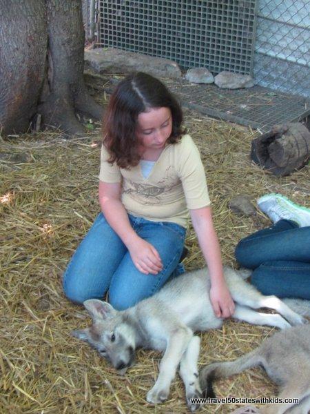 Wolf pups at Wolf Creek Habitat