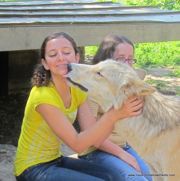 Wolfy kisses at Wolf Creek Habitat