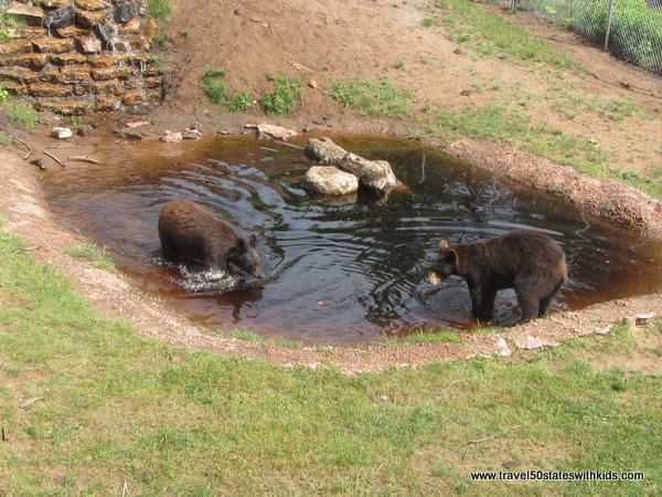 Bears in water at Oswald's Bear Ranch