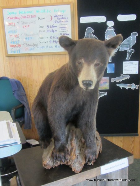 Seney Bear Cub Display