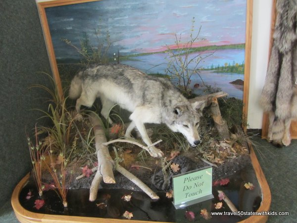 Seney NWR Coyote exhibit