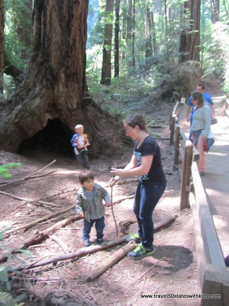 Toddlers love Muir Woods