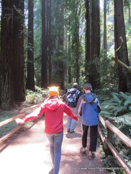 Walking at Muir Woods