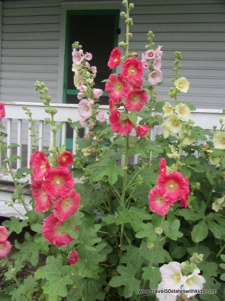 Amish Acres House Tour flowers