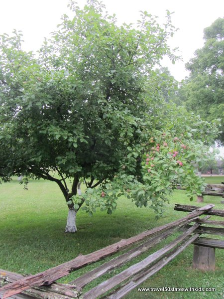 Amish Acres Orchard
