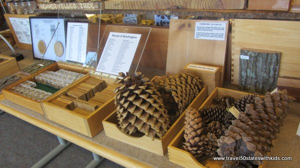 Pinecone and wood exhibit at Forest Learning Center at Mount St. Helens