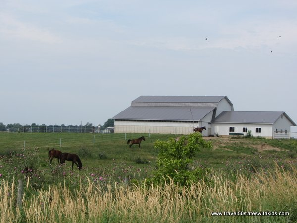 Horses in Amish Country