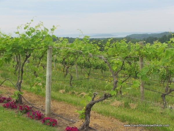 Grapevines on Old Mission Peninsula Traverse City