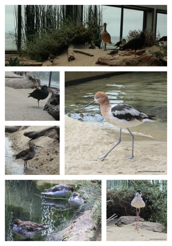 Bird Collage - Monterey Bay Aquarium