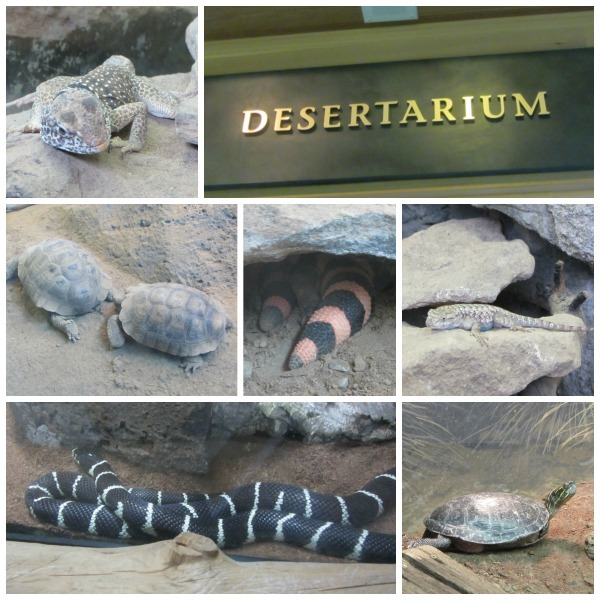 Desertarium collage - High Desert Museum
