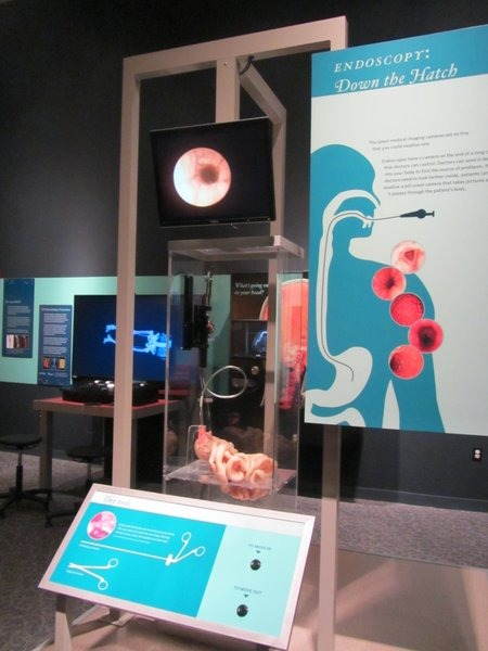 Endoscopy exhibit at Great Lakes Science Center