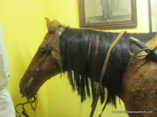 Horse - Bardstown Civil War Museum