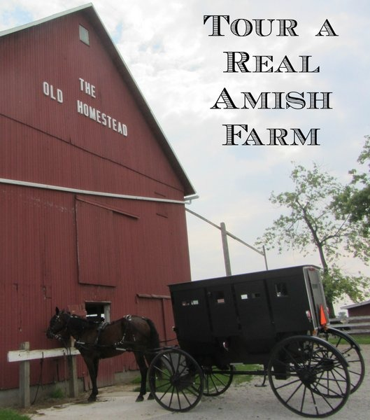 Tour a Real Amish Farm
