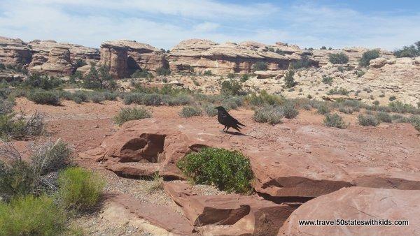 Slickrock Foot Trail - Canyonlands