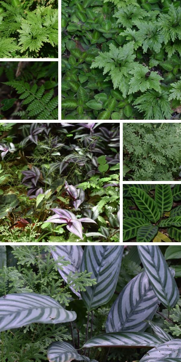 Costa Rica's Lush Foliage